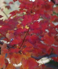 Autumn.  Can't wait.
