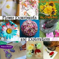 Mom to 2 Posh Lil Divas: 10 Flower Experiments and Explorations for Kids