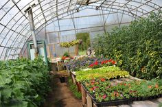 Green house, Nalum Gård Green Flowers, Fruit, Plants, House, The Fruit, Planets