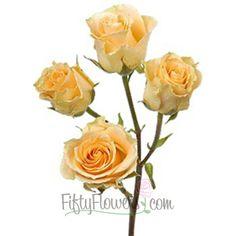 Peach Spray Rose Girlie Follies 350
