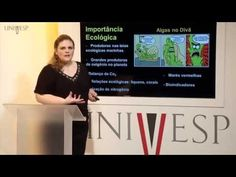 Biologia Geral - Aula 14 - Organismos fotossintetizantes 2 - YouTube