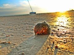 """""""Fall and the Beauty of It All"""" - My Forgotten Coast Photo Contest 2013  https://www.facebook.com/MyForgottenCoast   5/18/13- """"The Forgotten Shell""""    Photo Credit: Adrianne Woodward   AMATEUR DIVISON - Port St Joe"""