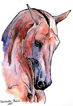 Akhal-teke horse by Paulina Stasikowska