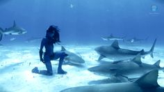 First Dance with Sharks