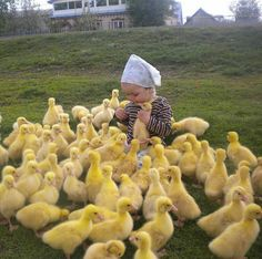 Mini Bebidas, Baby Ducks, Cute Little Animals, Animal Decor, Animal Nursery, Cute Creatures, Animals And Pets, Animals Images, Cute Kids