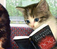 Because religion is laughable. Funny atheist/secular/religious memes, jokes, parody and satirical humour. Atheist Humor, Meme Pictures, Atheism, I Love Books, Pet Birds, Cats And Kittens, Funny Cats, It's Funny, Your Dog