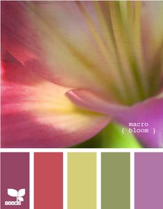 macro bloom. right now, this would be my pick for a color scheme for a late summer or early fall wedding.- I actually really like this color scheme! Its beautiful