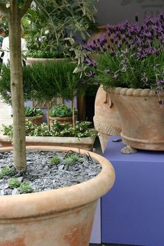 1000 images about terracotta pots on pinterest for 3 drayton terrace mermaid waters