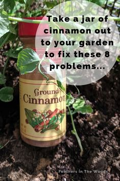 8 ways to use cinnamon in gardening. From rooting hormone to gnat removal a jar of cinnamon can be your gardens best friend! 8 ways to use cinnamon in gardening. From rooting hormone to gnat removal a jar of cinnamon can be your gardens best friend! Growing Vegetables, Growing Plants, Growing Carrots, Growing Lettuce, Growing Jalapenos, Growing Sweet Potatoes, Growing Tomatoes In Containers, Growing Roses, Garden Pests