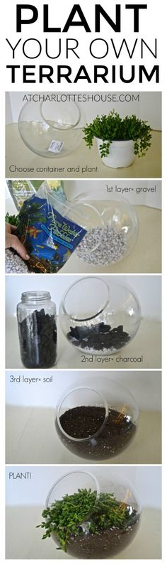 Easy tips to plant a healthy and hearty terrarium... super helpful!