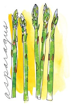 Sketch of the day My New Years Resolution is to get back to the habit of drawing something everyday. Today I just felt like drawing asparagus. I dont like to eat it. Watercolor Fruit, Watercolor Sketch, Watercolor And Ink, Watercolor Flowers, Watercolor Paintings, Vegetable Drawing, Watercolor Projects, Mail Art, Flower Art