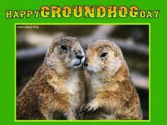 Groundhog Day Wishes Card eCard Images Free Groundhog Day Quotes