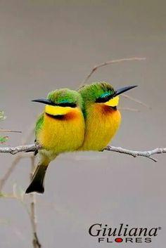Little Birds Lyrics -. - Incredible… Little Birds Lyrics – Incredible… Little Birds Lyrics – - Pretty Birds, Cute Birds, Beautiful Birds, Animals Beautiful, Cute Animals, Funny Birds, Funny Animals, Exotic Birds, Colorful Birds