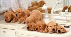 Ecomundo: Cuándo bañar a un perro por primera vez