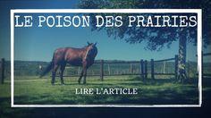 Le poison des prairies; les mauvaises herbes dangereuses pour ton poney