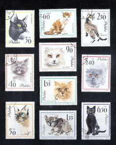 Feel free to use in your artwork. Art Postal, Gatos Cats, Postage Stamp Art, Cat Posters, Pin Art, My Themes, Fauna, Stamp Collecting, Pet Birds