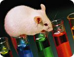rats are empathetic?    http://www.naturalnews.com/034715_animal_consciousness_rats_empathy.html