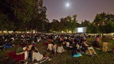 Cine Conchas: o cinema gratuito e ao ar livre regressa a Lisboa - Observador