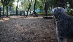 Nos lanzamos a 4 parques para perros te decimos si rifan.