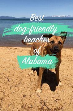 Discover the best dog-friendly beaches of Alabama! Beach Rv Camping, Tahiti Tattoo, Beach Photography Friends, Honey Moon, Best Island Vacation, Where Is Bora Bora, Dog Beach, Beaches In The World