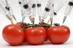 Informazione Contro!: L' OGM mascherato