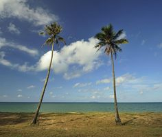 Coconut Trees Alongside The Beach Photograph  - Coconut Trees Alongside The Beach Fine Art Print