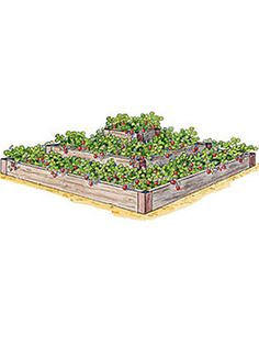 3 tiered strawberry bed--Gardener's Supply--I will wait til end of season when it is half off and get it for next year!