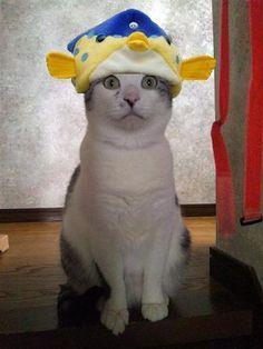 改めて、皆さん明けましておめでとうございます♪ 新年もどうぞ宜しくお願いします(๑๑)  |ayumimarudesuの投稿画像