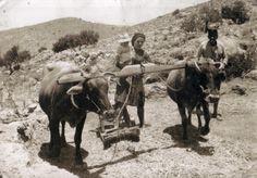 ΘΥΜΑΜΑΙ...Τον παλιό καιρό..που Αλωνίζαν στο χωριό ...!!!!!! Greek History, Famous Photographers, Camel, Greece, Cow, Horses, Traditional, Black And White, Animals