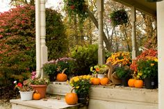 Some plants for your Fall garden!