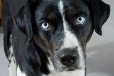 Wie es den Therapiehunden in einem therapeutischen Setting geht und wie eine möglichst stressfreie Situation für die Tiere geschaffen werden...