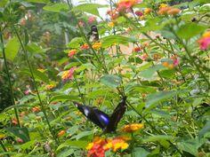Butterflies in Palawan