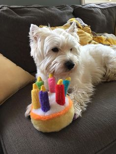 Beau is celebrating his 3rd Birthday
