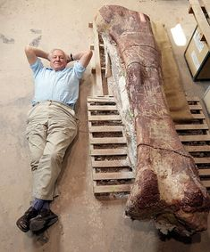 David Attenborough Lies Alongside a Giant Femur (Thigh Bone) Potentially the biggest terrestrial animal known to science.Sir David Attenborough Lies Alongside a Giant Femur (Thigh Bone) Potentially the biggest terrestrial animal known to science.