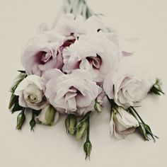 pink lisianthus via beautifully, suddenly
