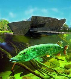 Aquarienlandschaft im Müritzeum, Deutschlands größtem Aquarium für heimische Süßwasserfische: http://www.mueritzeum.de/