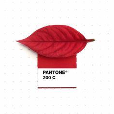 Pantone Red, Pantone Colour Palettes, Pantone Color, Poinsettia, Pantone Matching System, Red Leaves, Colour Pallette, Color Psychology, Colour Board