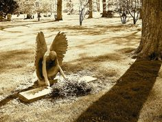 writing prompt: You stumble upon this scene as you take a short cut through the graveyard.  You are admiring the angel statue when it starts to move and you realise its not actually statue and whats more - its tending the grave. write what happens next.- by previous pinner