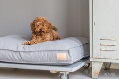 Steigerhouten hondenmand zelf maken? In deze blog laat ik zien hoe je een stoere verrijdbare hondenmand van steigerhout zelf kunt maken.