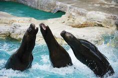 © Daniel Zupanc Whale, Summertime, Animals, Shopping, Drinking, Musik, Essen, Whales, Animales