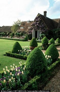 Lovely lawn and border gardens English Garden, Lawn, Modern Country, Cottage Gardens, Tulip, Garden Cottage, Formal Gardens, Backyard, Topiari
