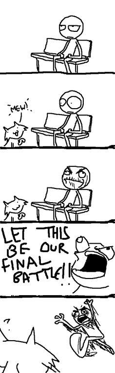 I don't like cats.