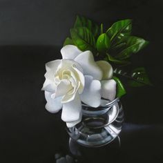 Gardenia 6x6, painting by artist M Collier