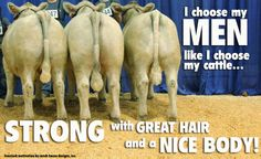 "I choose my men like a choose my cattle. Livestock Motivation by Ranch House Designs. ""This is so true"". Livestock Judging, Showing Livestock, Country Girl Life, Country Girls, Cow Quotes, Show Cows, Farm Humor, Show Cattle, Cattle Farming"
