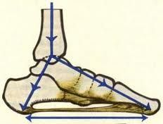 Great exercises for the feet to add to my standing Pilates training