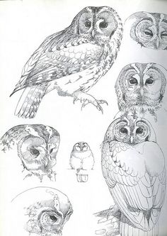 Owls of the Northern Hemisphere Madame Mondlicht Bird Drawings, Pencil Art Drawings, Animal Drawings, Drawing Art, Owl Art, Bird Art, Animal Sketches, Art Sketches, Owl Sketch