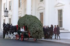 First Lady Michelle Obama, with daughters Sasha and Malia, along with Obama family pets Bo and Sunny, welcome the arrival of the official White House Christmas tree.