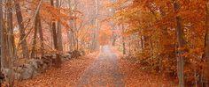 Wilton, CT: Fall in Wilton