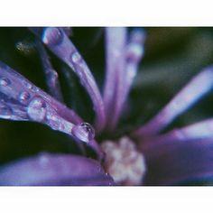コーネリアス @sarunowakusei .#iPhone#my_dai...Instagram photo | Websta (Webstagram)