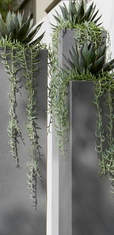 architectural succulents floral display